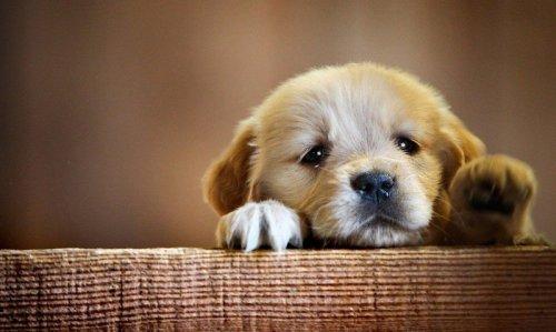 A gazdi hiányától is depressziós lehet a kutya (Fotó: upliftifyer.com)
