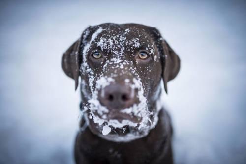 A tartós hidegre fel kell készülni, főleg kinti kutyák esetében (Fotó: practicalpaw.com)