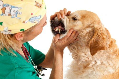 Ellenőriztessük kutyánk fogait az állatorvossal