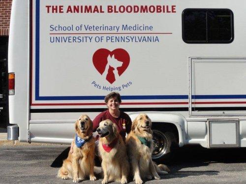 Amerika - Véradó mobil kutyák számára