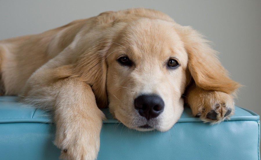 Tüsszögés, szipogás, köhögés... Náthás a kutyám?