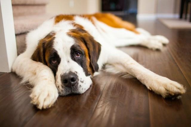 bernáthegyi terápiás kutya