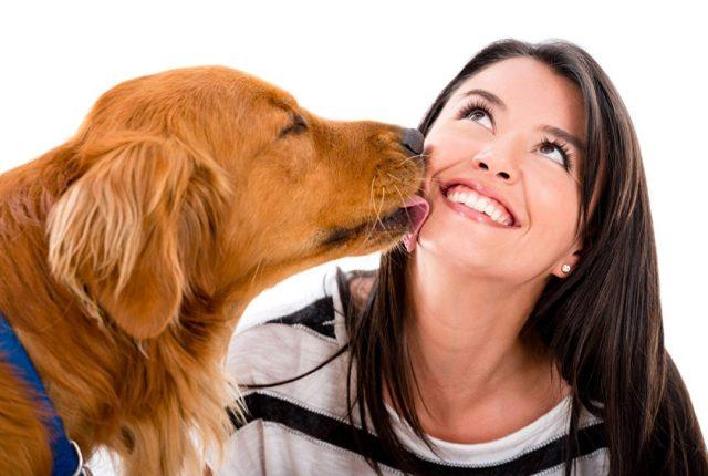 miért nyalogat a kutya