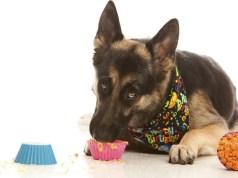 mit nem ehet a kutya