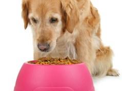 idős kutya etetése