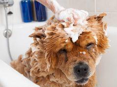 kutya fürdetése kézzel