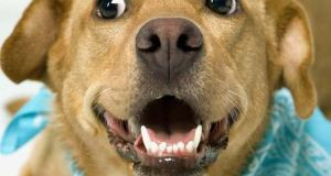 kutya fogváltás