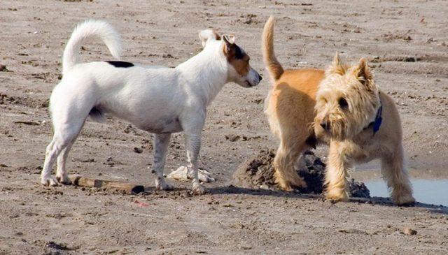 kutya tüzelése és jelei