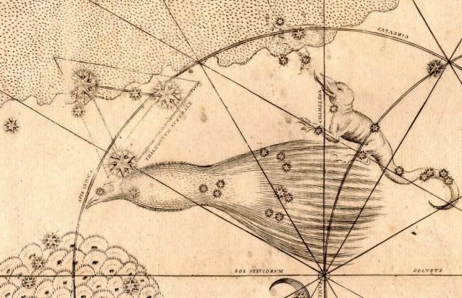 Apus - Paradijsvogel volgens Johann Bayer