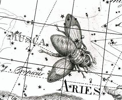 Musca Borealis op kaart XI van de Uranographia uit 1801 van Johann Bode.