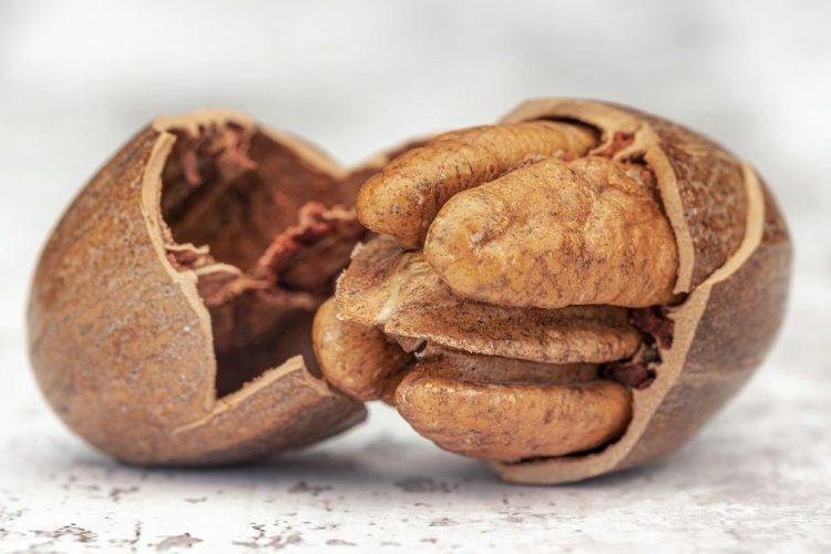 Pecan Nut Food Nutshell Shell - matthewsjackie / Pixabay