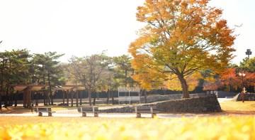 Autumn Park Trees Benches Grass  - haneunmango / Pixabay