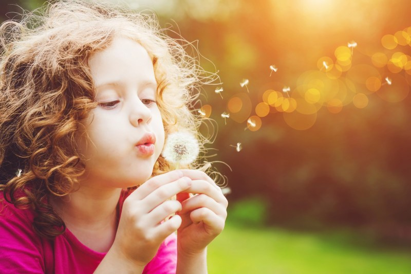 Little curly girl blowing dandelion in spring park.