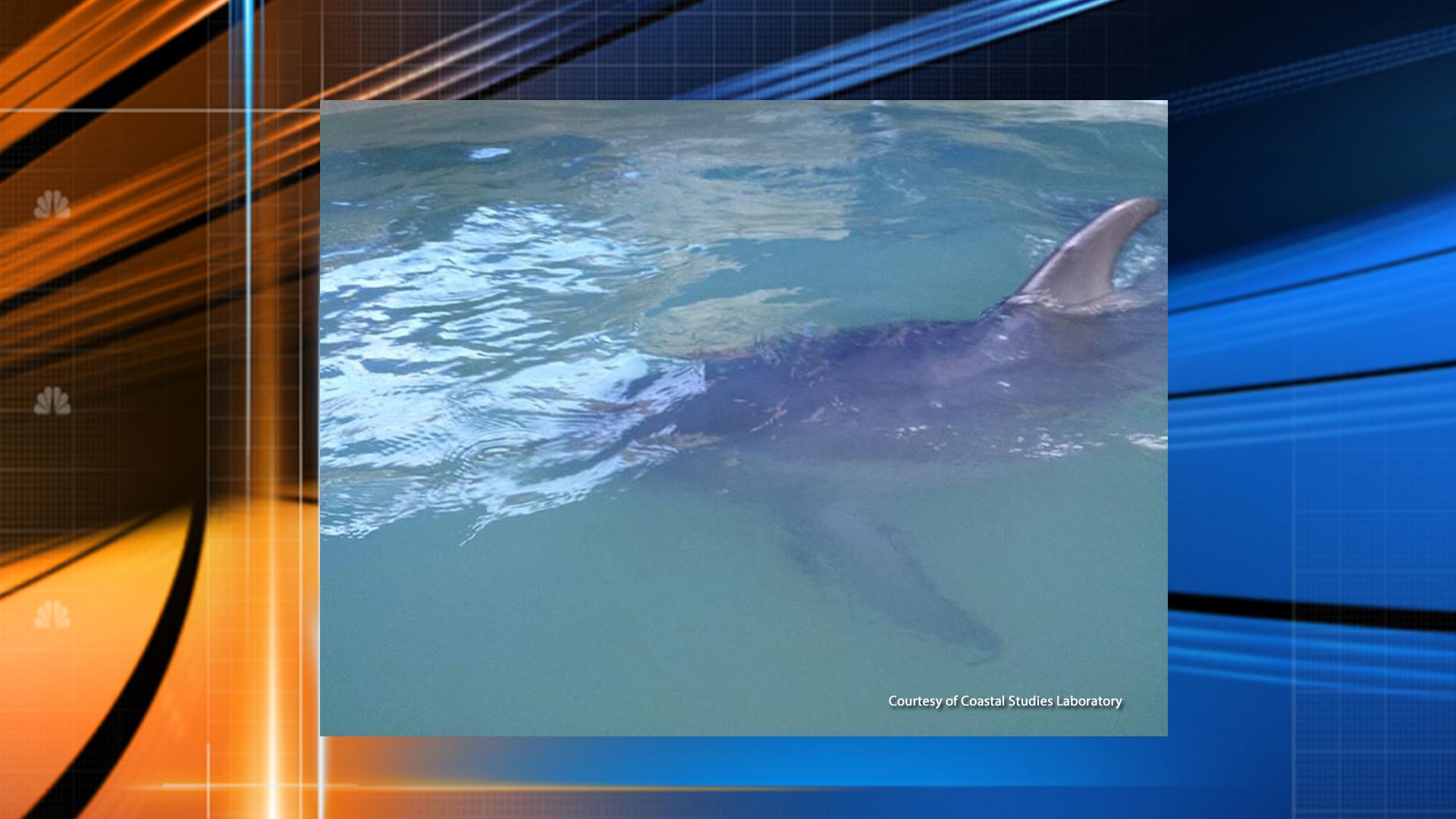 Dolphin_1443046064412.jpg