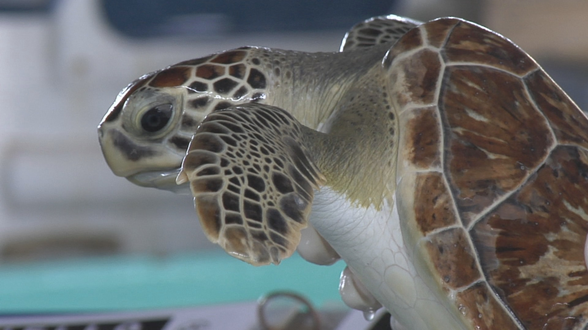 sea turtle_1442353701600.jpg