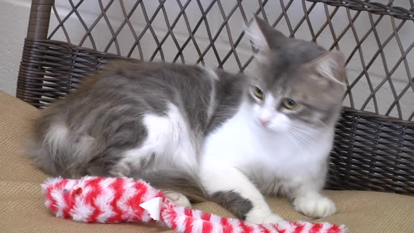 Pet of the Week- Fluffy_74861549-159532