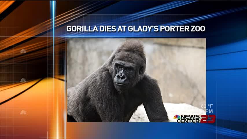 Gorilla Dies at Gladys Porter Zoo_15760866-159532