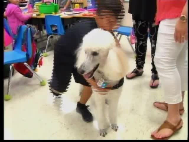 Meet the Harlingen CISD Therapy Dog