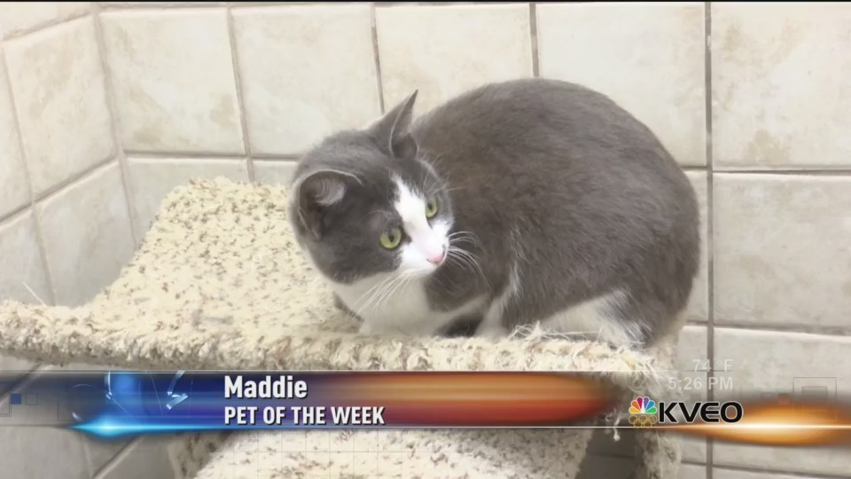 Pet_of_the_Week__Maddie_0_20180326231246
