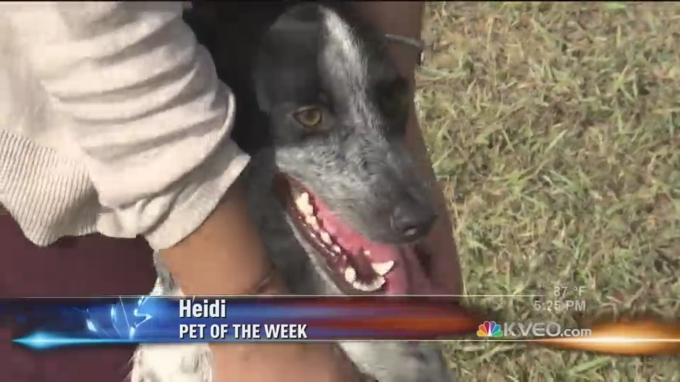 Pet_of_the_Week__Heidi_0_20180813225011