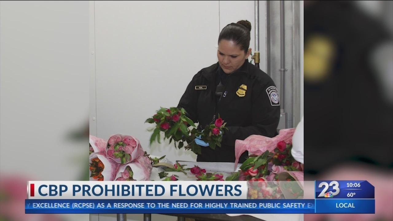 CBP_Prohibited_Flowers_0_20190213042301