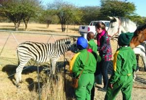 Mrs Florence Greyling feeding the zebra at the Vanross Animal Farm in Thabazimbi.