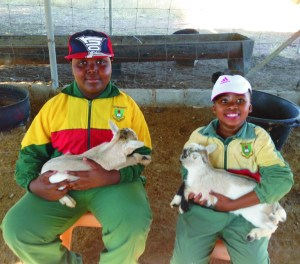 Some of the learners wanted to hold the little farm animals.