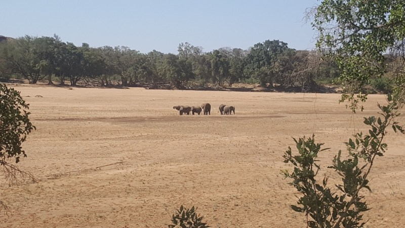 Limpopo river elephants