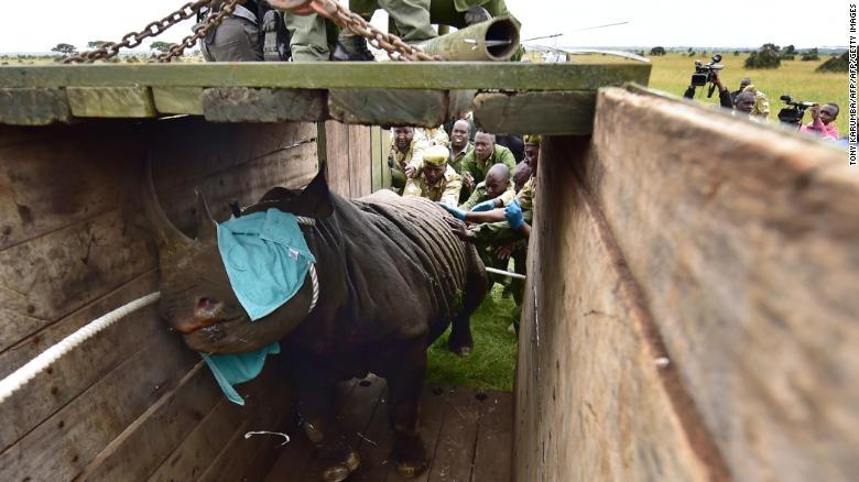 15 Jul Swartrenosters dood na hervestiging in Kenia
