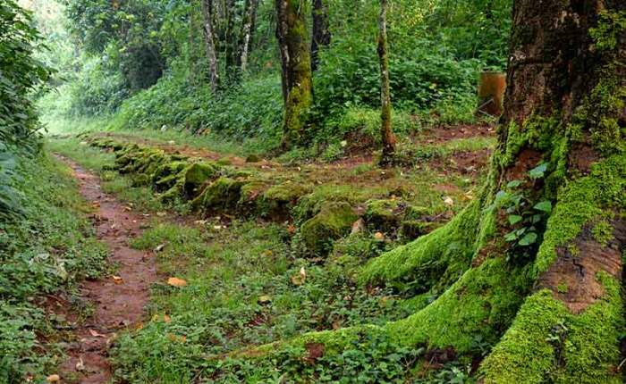 A hiking trail in Mt. Elgon National Park+Uganda+travel_with+Kwez+Outdoors