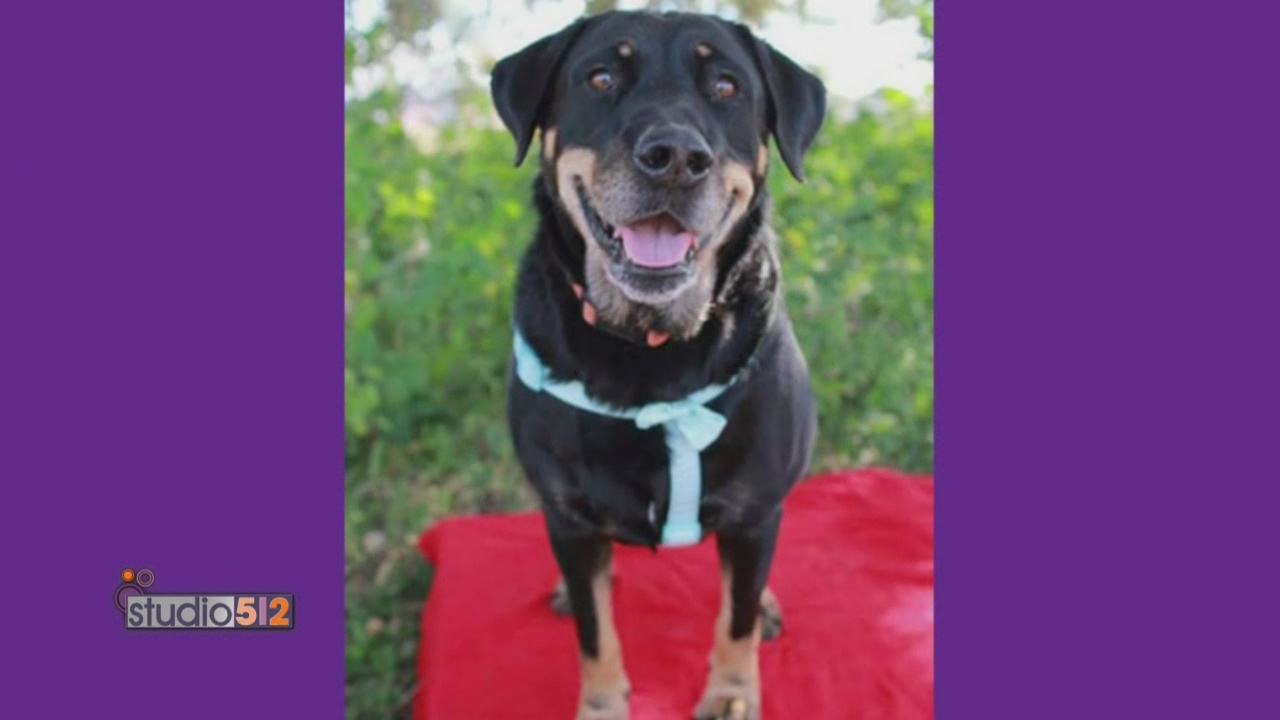3-25-15 Pet of Week Austin Dog Rescue-Dorie_108791