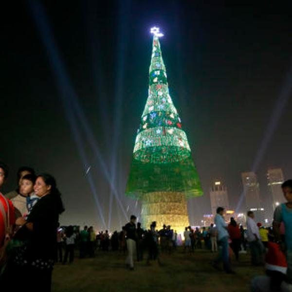 Sri Lanka Christmas Tree_391989