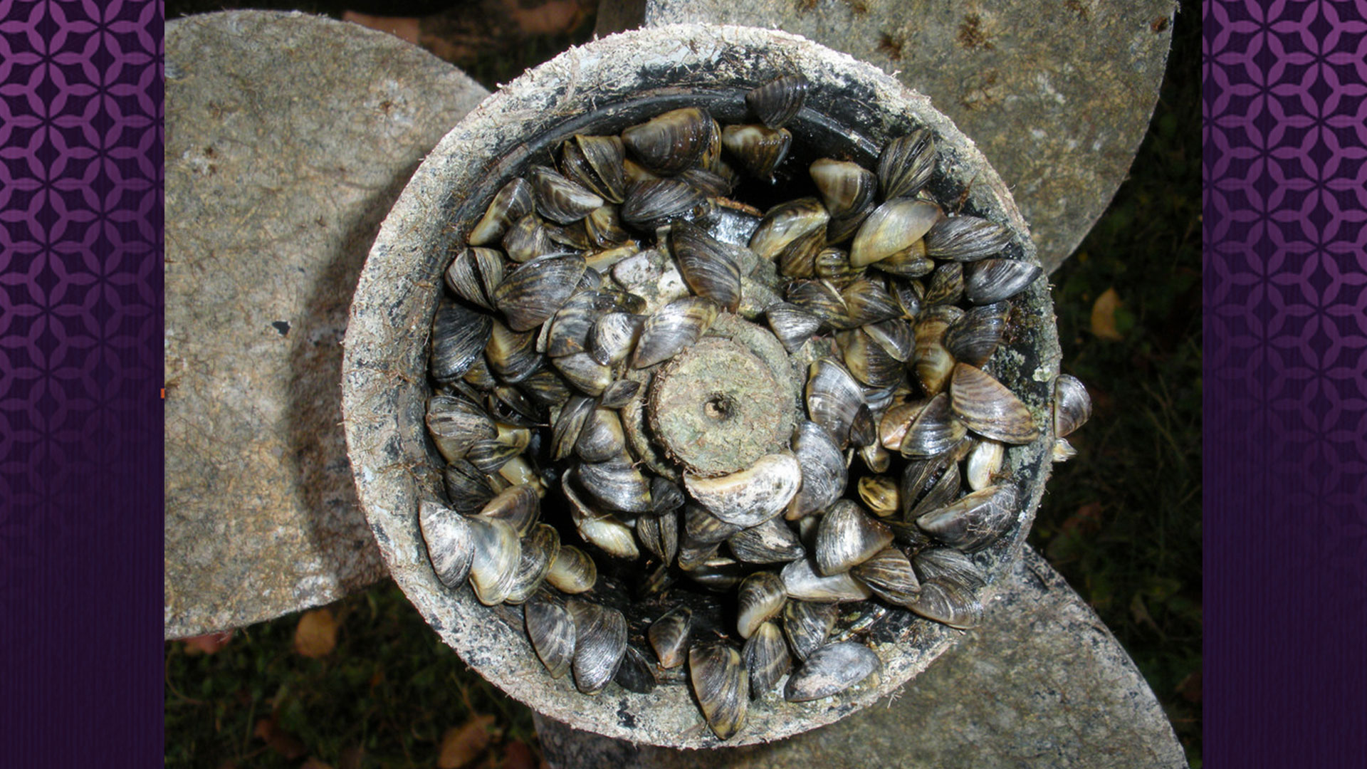 studio-512-austin-watershed-protection-zebra-mussels-3_534959