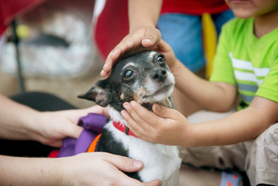 Austin Animal Center breaks record for number of lives saved_418304