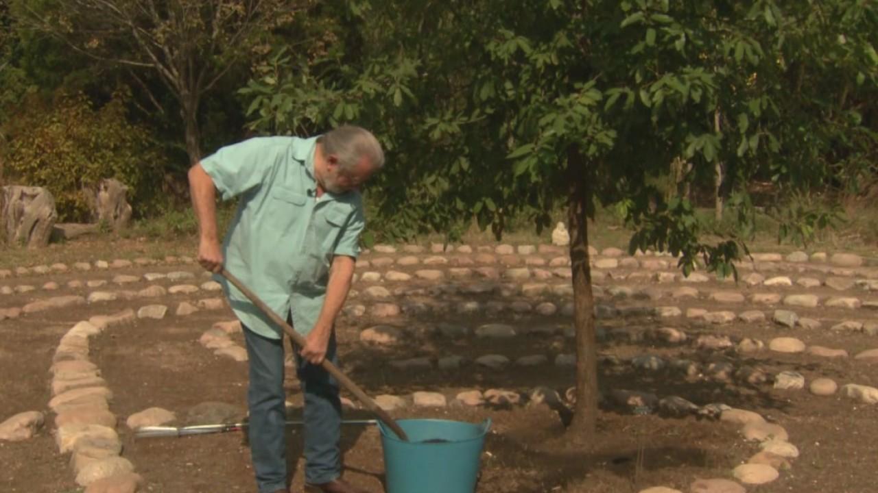 The Weekend Gardener_ Planting Trees_575212