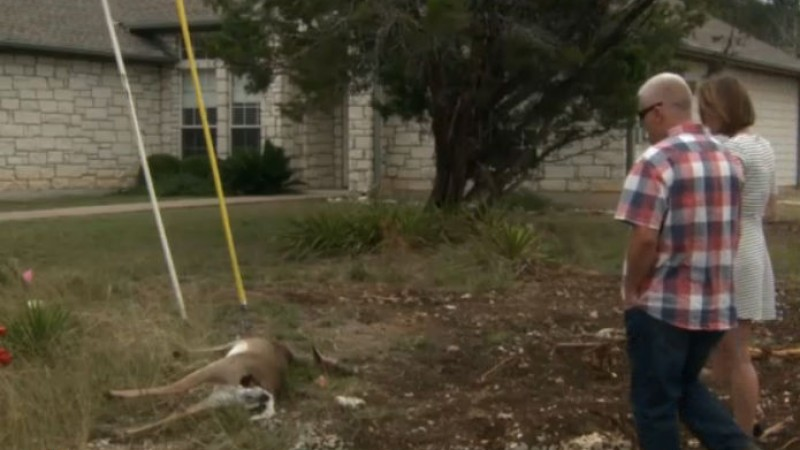 Lago Vista neighbors find a dead dear shot in their backyard_581400
