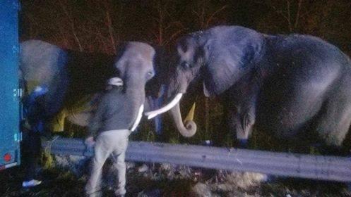 Elephants escape burning truck_585200