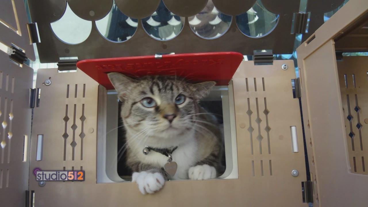 KittyKat_591932