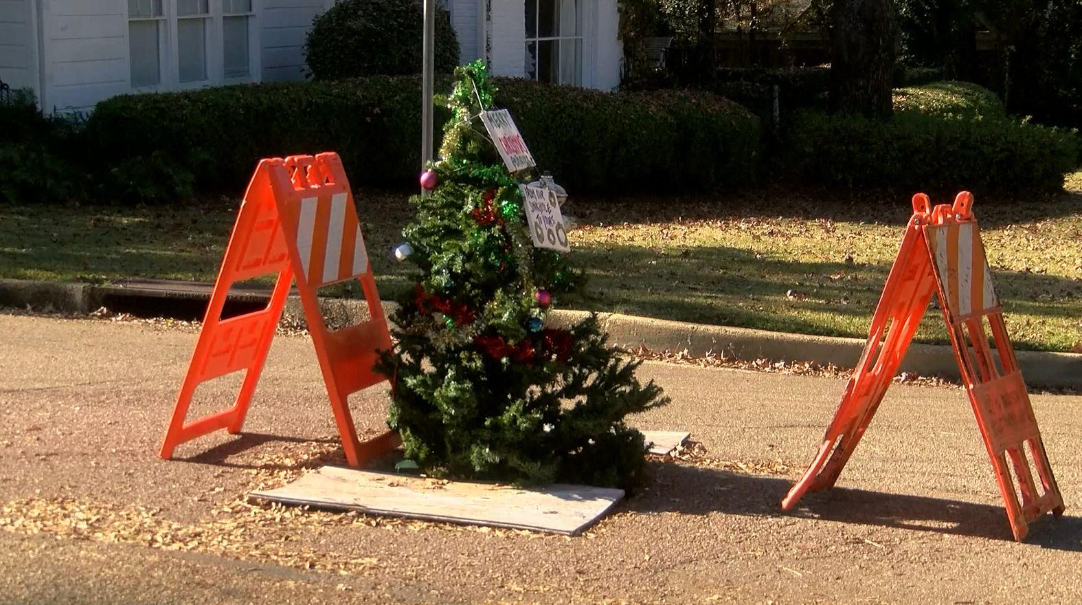 tree pothole_597791