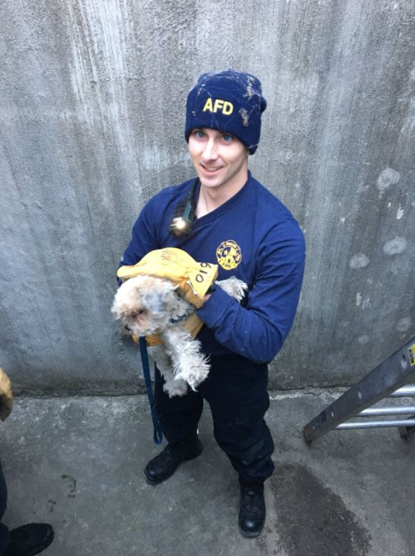 afd dog rescue_607297