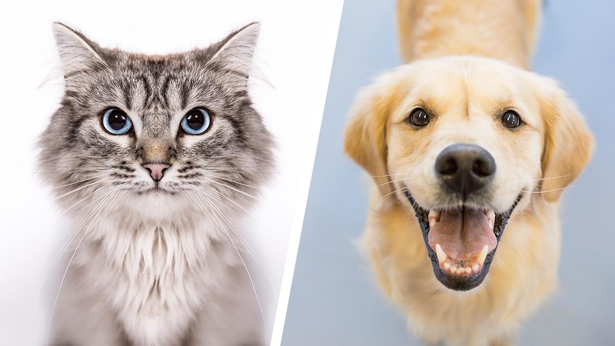 dog-cat-diptych_497498