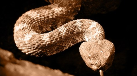SNAKES! Texas' venomous rattlers, cottonmouths slithering out with warmer weather