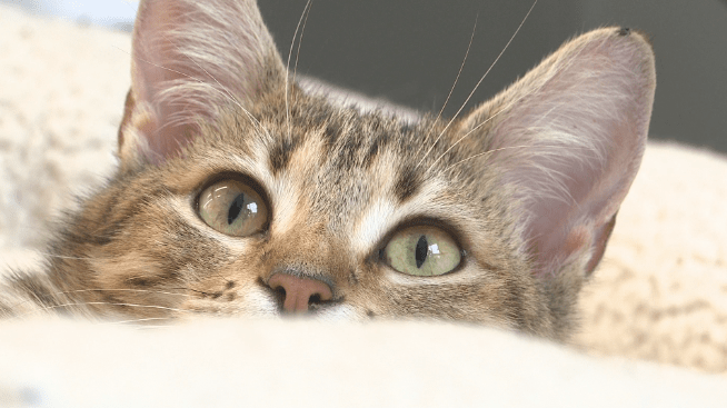 cat at wcras_1552560160836.PNG.jpg