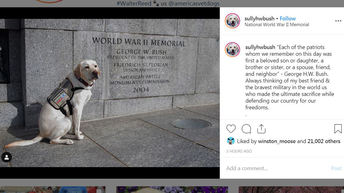 Late President George HW Bush's service dog honors him on
