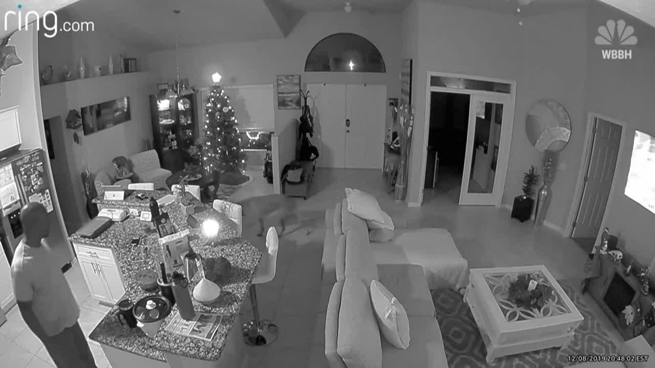 Ring camera hacked
