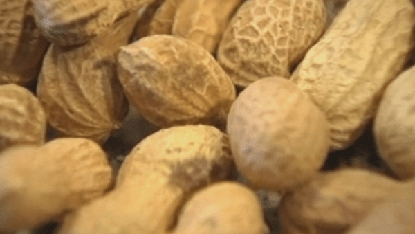 Peanut File Photo