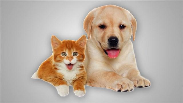 pets_mgn_80815E00-RQSBY_1537562821445.jpg