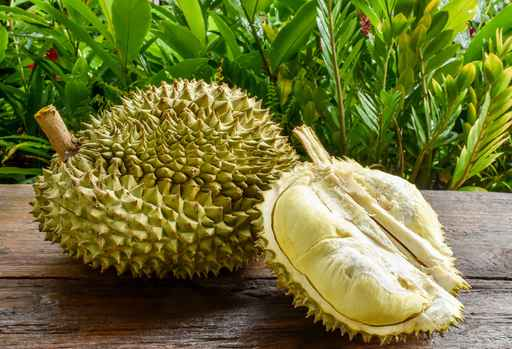 Ripe Durian special selected for durian lovers ready to eat cond_1557776566876