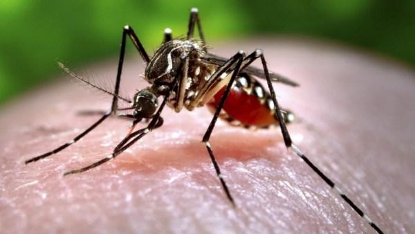DIY Bug Spray for Mosquito Bites