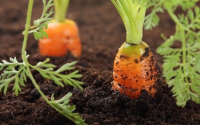 Self-Sustainable Gardening to grow your own food